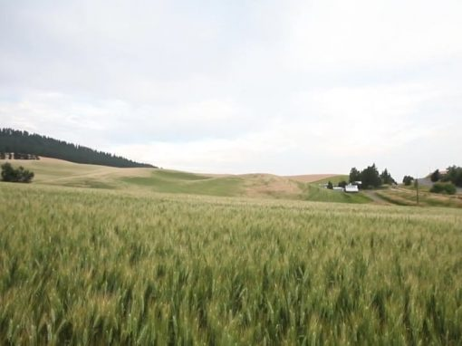 Washington Grain Growers