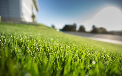 Why is your neighbor's grass greener? Because they watered it.